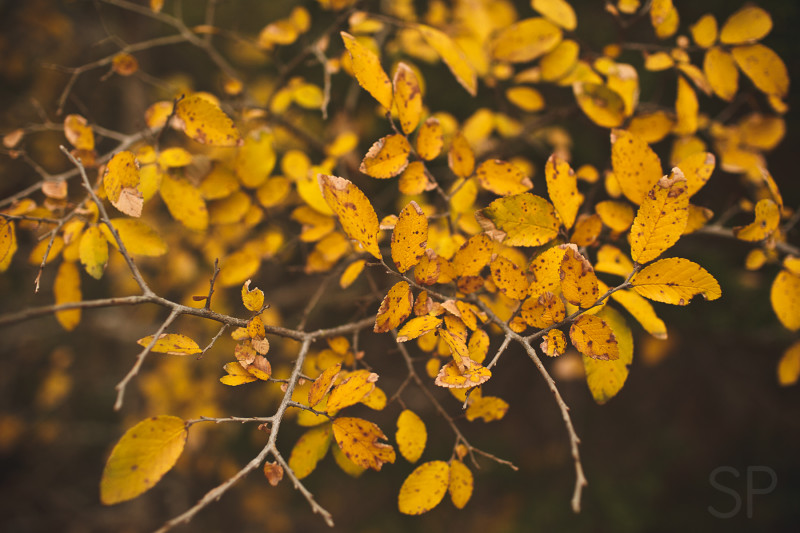 Fall leaves 12.20. Shiloh Photography