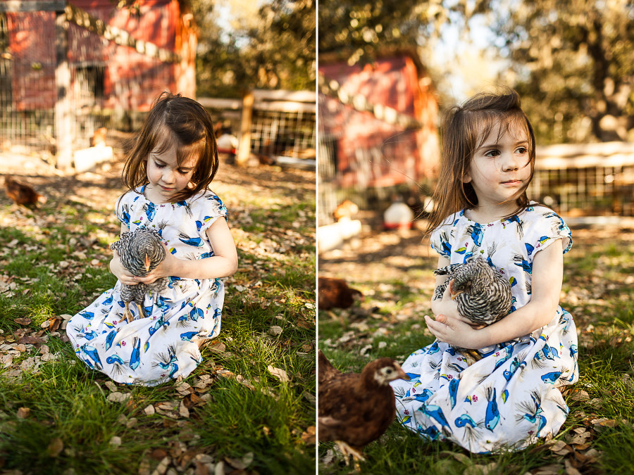 SHiloh Photography || Chicken Love 3.294