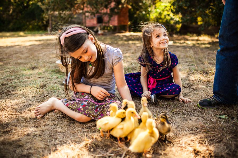 SP || Ducklings 4