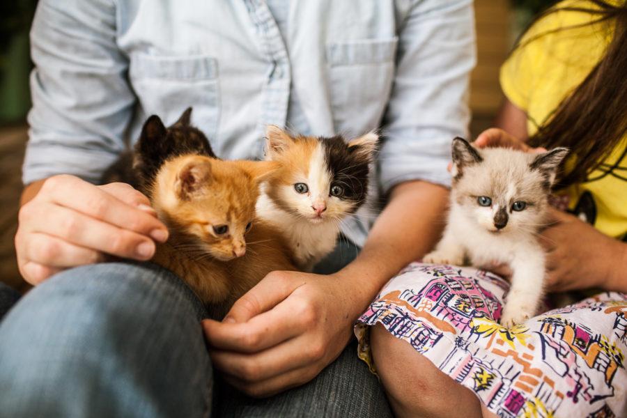SP || Kittens 6.10-1
