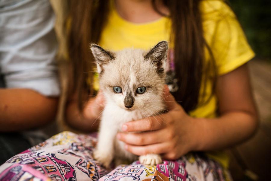 SP || Kittens 6.10